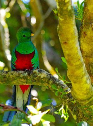 Monteverde Costa Rica Tours
