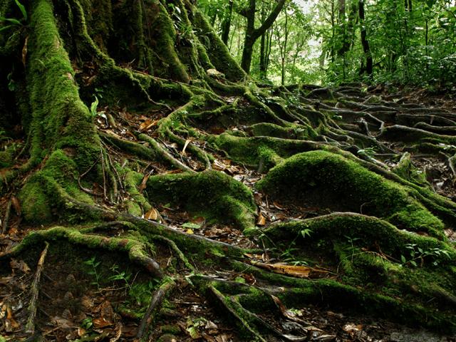 Monteverde Cloud Forest Reserve Tour | Costa Rica