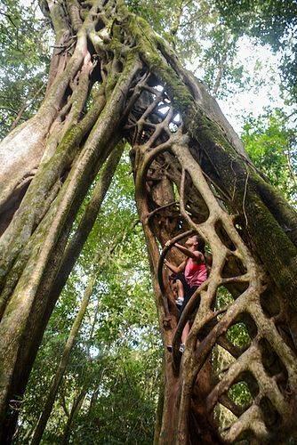 Tree Top Monteverde Cloud Forest Costa Rica
