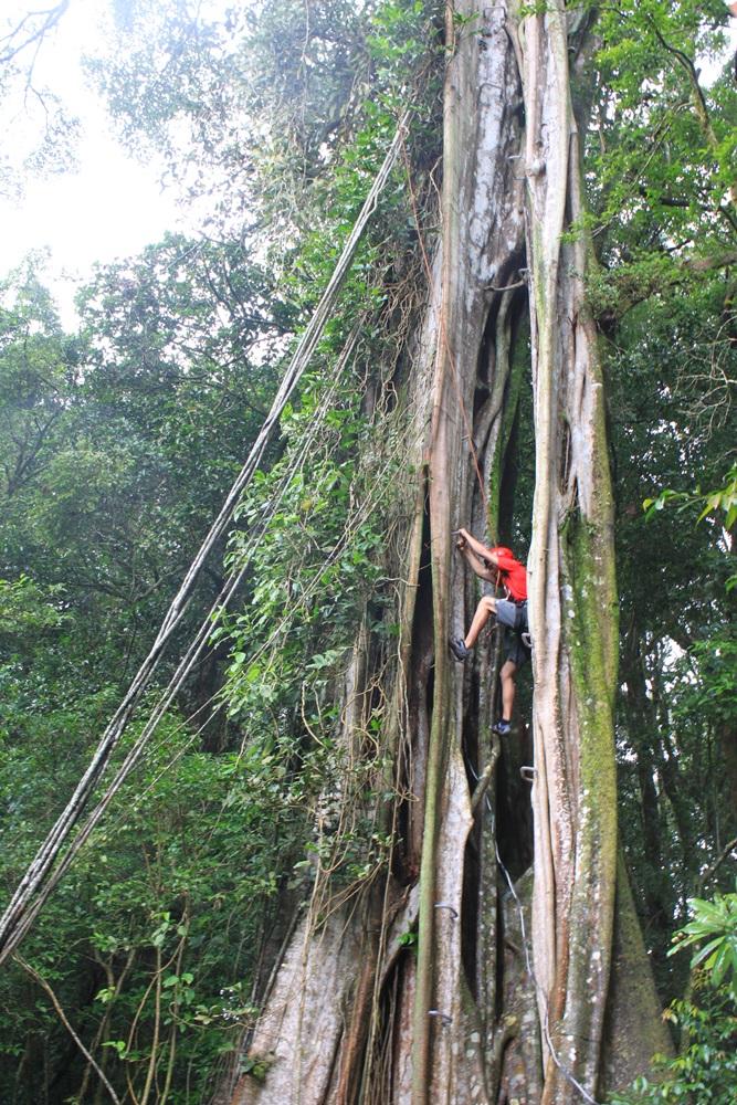 TreeTop Climbing-costa-rica