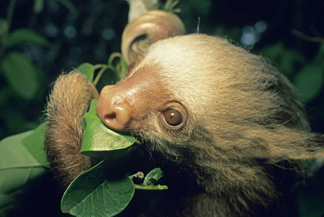 Monteverde Cloud Forest Reserve Night Tour