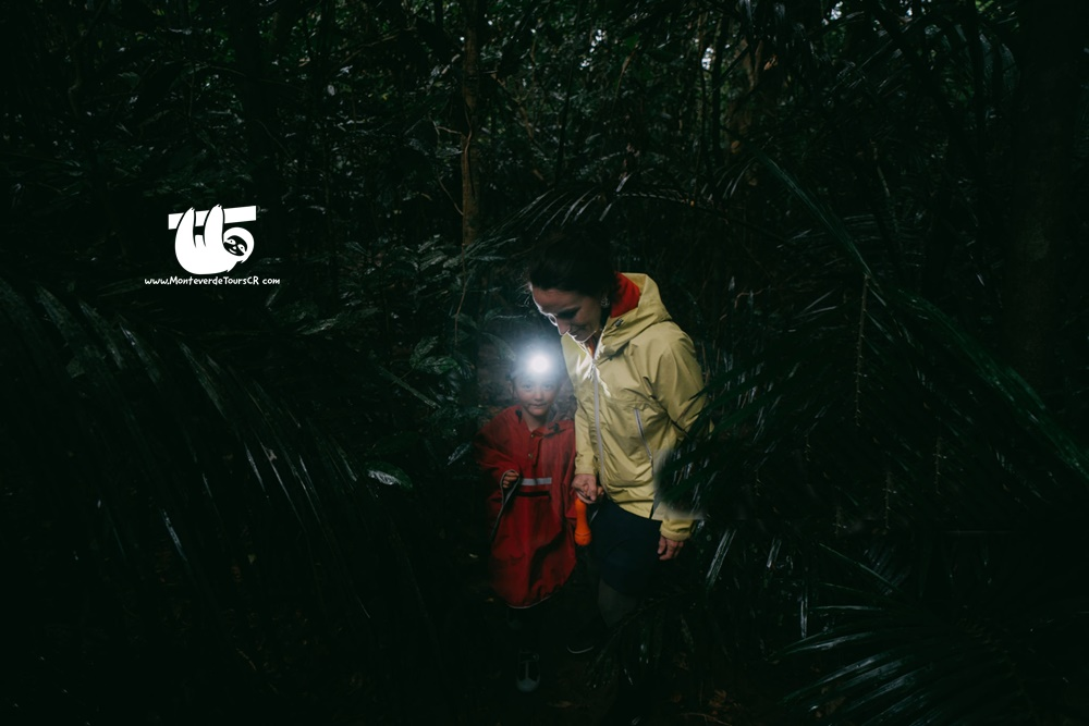 Tour nocturno monteverde costa rica