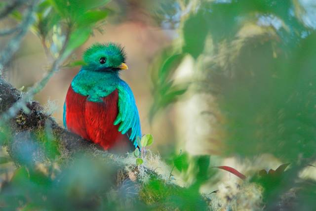Monteverde cloud forest birdwatching costa rica