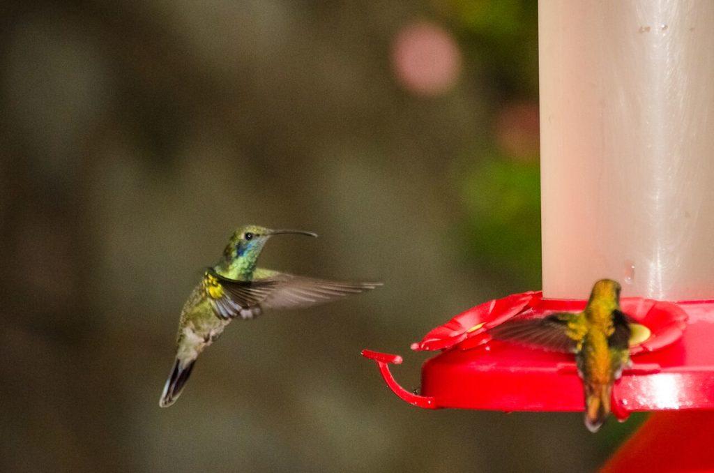 Costa Rica Hummingbird Garden