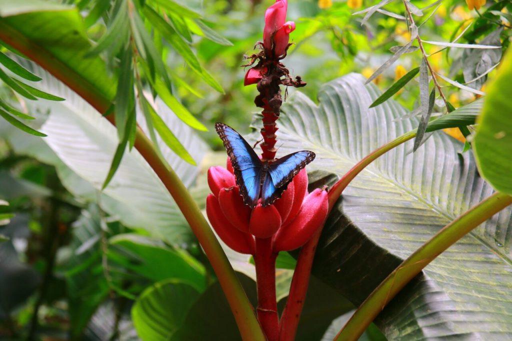 Costa Rica Butterfly Garden