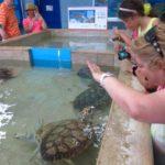 tortuguero-green-turtle-musseum