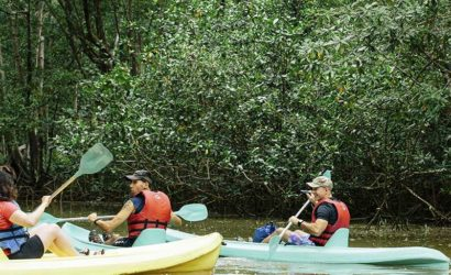 Damas Island Mangrove Kayaking