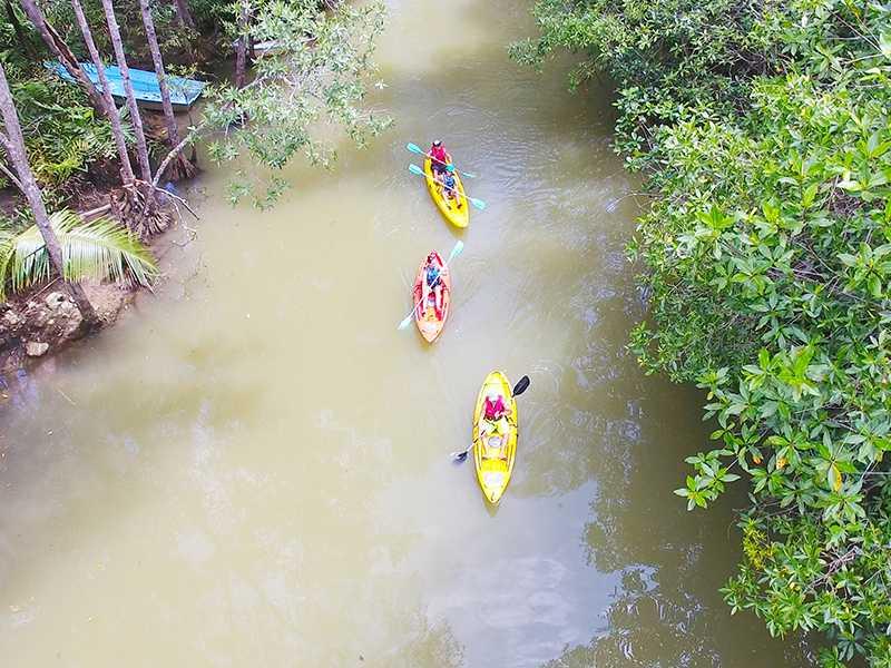 Damas Mangrove Kayaking