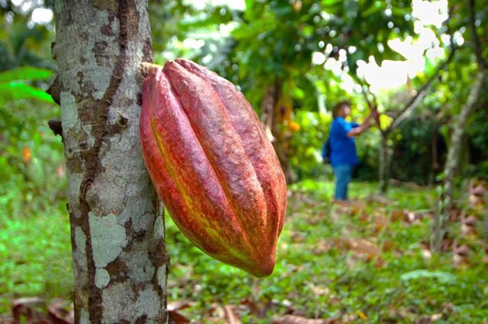 La Fortuna Chocolate Tours Arenal Volcano Costa Rica