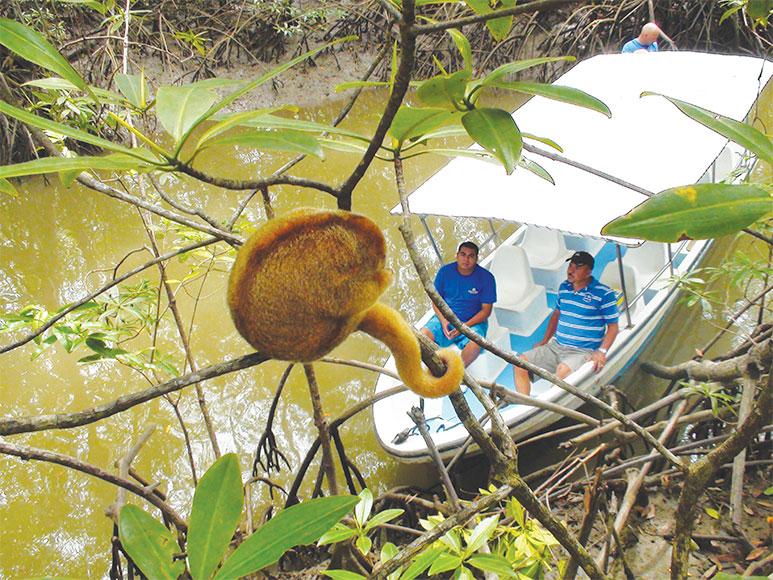 Damas Mangrove Tour Manuel Antonio