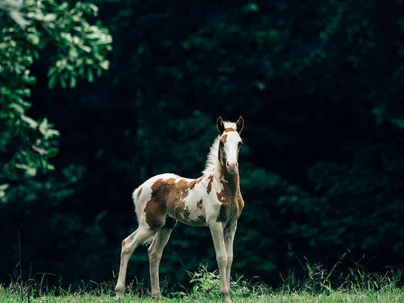 Manuel Antonio Horseback Riding Tour