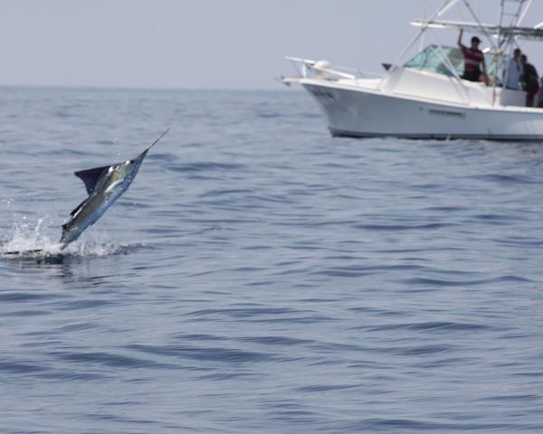 Costa Rica Fishing 11