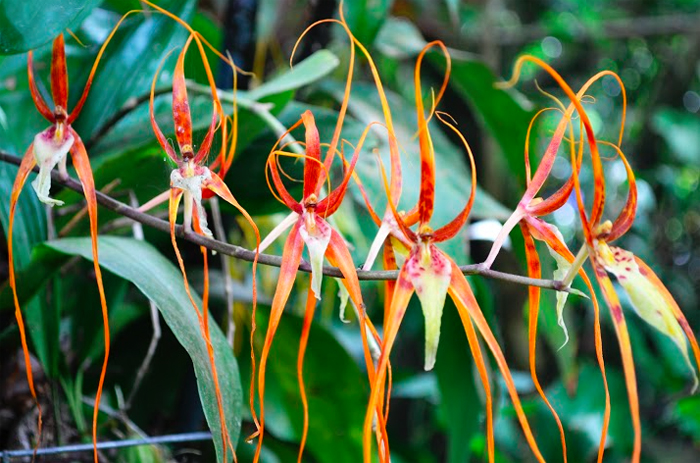 Costa Rica Orchids