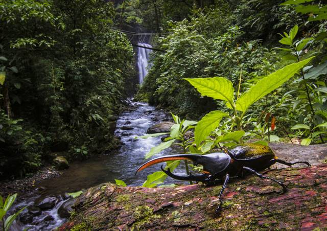 El Tigre Waterfalls Monteverde Cloud Forest Costa Rica