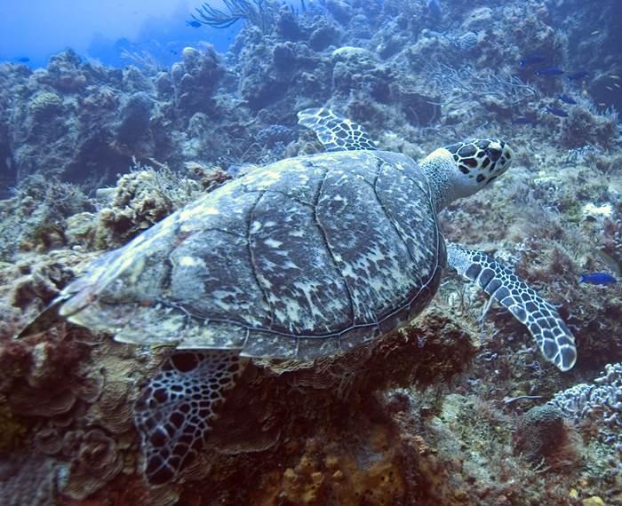 Costa Rica Scuba Diving Isla del Cano Drake Bay
