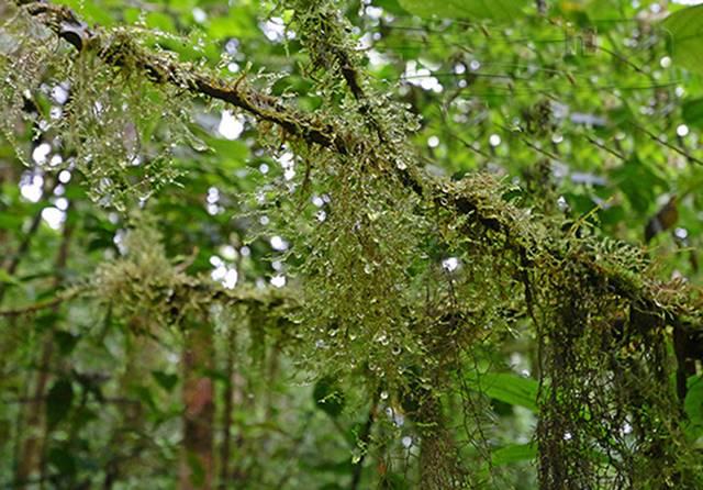 Curicancha Reserve Tour Monteverde Cloud Forest