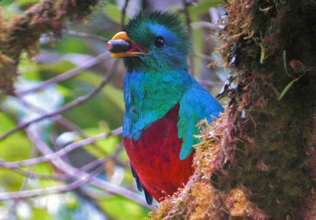 Curicancha Reserve Monteverde Cloud Forest Tour