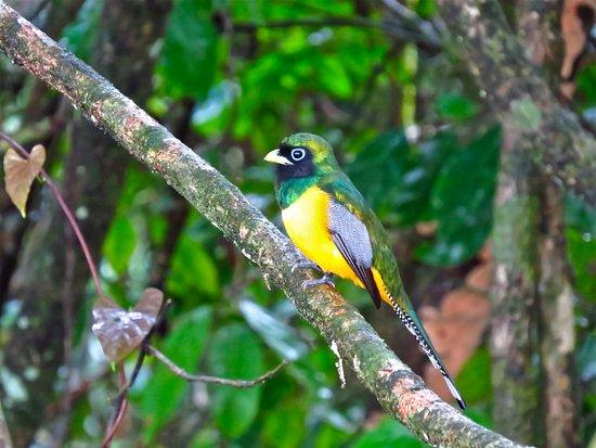 Birdwatching Dreak Bay Corcovado Osa Peninsula