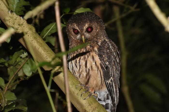 Ficus Trail Monteverde Night Walk