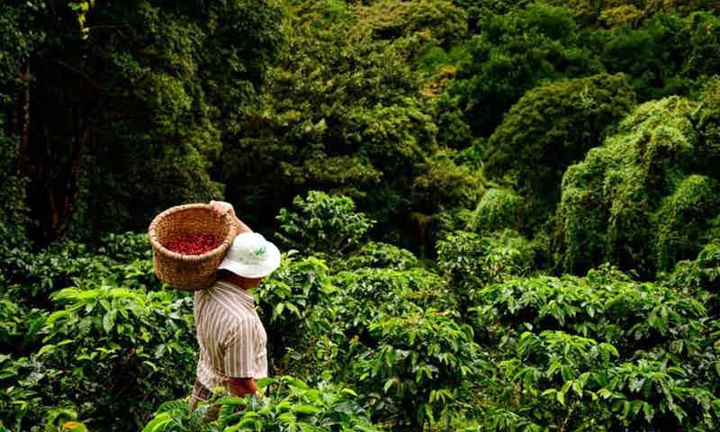 Don Juan Coffee Tours Monteverde Cloud Forest 2