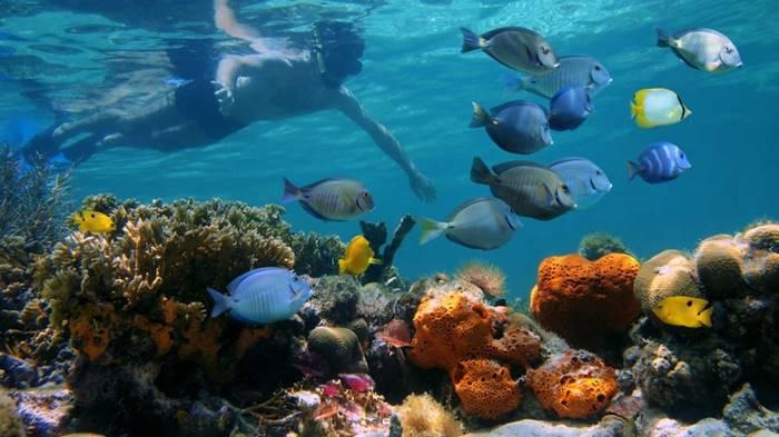 Puerto Viejo Snorkeling Costa Rica