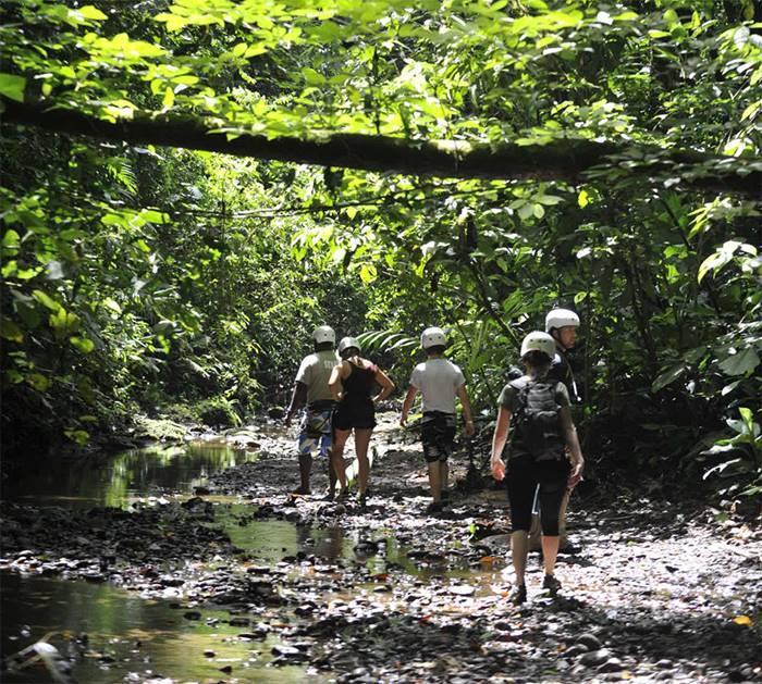 Jungle hike tours puerto viejo