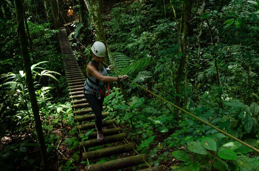 Zip Line Canopy Tour Puerto Viejo Talamanca Costa Rica