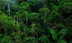 La Cureña Costa Rica